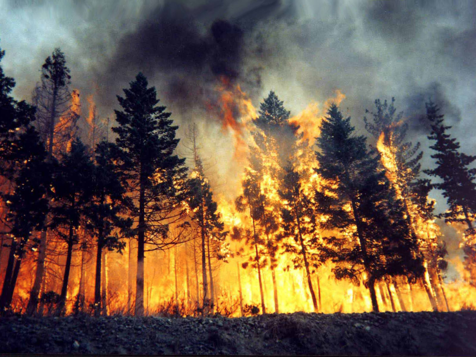 an introduction to wildfires and its negative effect on our ecosystem Tell students that introducing a non-native species to a new ecosystem can have negative consequences—the species may become an invasive species, or a species that causes harm to the new environment.